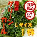 【税込 バラ売り】長野県産他 グリーンカール Lサイズ 1株