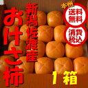 旬 果物【本州送料無料 税込】新潟県佐渡産 おけさ柿 2L ハーフ箱16玉(約3.5kg)