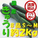 【税込 バラ売り】高知県産他 きゅうり BS(M) 2kg(胡瓜 キュウリ きゅうり カッパ サラダ)上越フルーツ