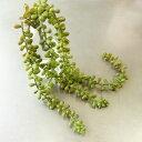 アレンジメント インテリアギフト 鉢花鑑賞 フェイクインテリアグリーン 手間いらずの小さなホット空間