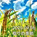 <30年産>ヤマトライス 白米と同じように炊けるやわらかい玄米 900g 富山県産コシヒカリ使用 こしひかり ギャバ 酵素 食物繊維【区分A】