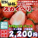 ★クール送料無料★☆1周年記念特価1000円引き☆★イチゴに...