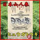 【送料無料】日本山人参(ヒュウガトウキ)お茶 日向の恵 3ヶ月分 飲みやすいお茶に!健康茶 ドリンク 02P03Dec16