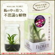 【送料無料】メリクロン フローレット 瓶で育つ不思議な植物(蘭(ラン)苗) デンファレ【生活雑貨館】