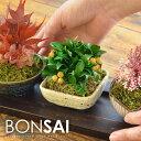 【送料無料】盆栽 枯れないミニ盆栽3点セット 専用トレイ付き ギフト 敬老の日