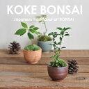 【送料無料】お手入れ簡単 苔盆栽 PlantPack ミニ盆栽 bonsai ボンサイ 苔 苔玉 コケ 小盆栽 植物【のし・包装不可】