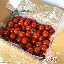 ミニトマト ピッコロトマト 3Kg(愛知県産ミニトマト)【送料無料】生産者より産地直送!美味しいミニトマト プチトマト