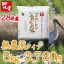 平成28年産 新米 無農薬 無化学肥料 自然栽培 米 食べる健康!食べる貢献!生命を育むお米 コウノ