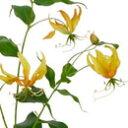 【造花 ・夏の造花 ・グロリオサスプレイ】トロピカルグロリオサスプレイ・オレンジ