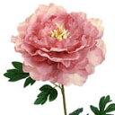 【造花・夏の造花・ピオニー】ラージピオニー<BC付>・アンティークラベンダー