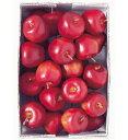 【食品サンプル・果物・野菜・フルーツ・ベジタブル】35mm アメリカンアップルピック(24本/パック)