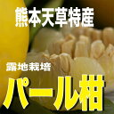 10kg箱(7〜9kg)入り天草【特産】パール柑(文旦)