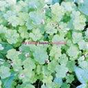 楽天Joshin web CD/DVD楽天市場店【送料無料】organic/My Little Lover[CD]【返品種別A】