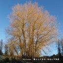 艺人名: Ha行 - 【送料無料】愛という名の、自由と不自由/ビリー・バンバン[CD]【返品種別A】