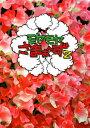 【送料無料】モヤモヤさまぁ〜ず2 DVD-BOX(VOL.28、VOL.29)/さまぁ〜ず[DVD]【返品種別A】