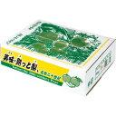 ご自宅用 二十世紀梨 20世紀梨 鳥取県 美味・熟っと梨 5kg 3L(12から14玉)ご家庭用 完熟タイプ