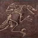 化石置物インテリア 恐竜化石ヴェロキラプトルの化石 / Velociraptor Freeze