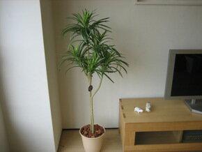 モデルルームで使用する水遣りのない人工樹木、人工観葉植物ユッカ Greeness-dネットショップ限定オリジナル設定 モデルルームで使用する、手間要らずの人工観葉植物