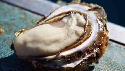 【三陸とれたて市場】三陸産真牡蠣ハーフシェル刺身用セット