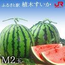 ふるさと駅 熊本産植木すいか(M 2玉)...