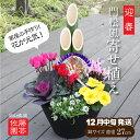 迎春 門松風寄せ植え^【送料無料/お正月用鉢植え/佐藤園芸手作り】