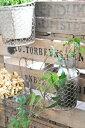 【鉢 植木鉢 ポット ホルダー 壁付 壁掛け シャビー ガーデニング おしゃれ アンティーク調 アンティーク風】SABBY ポットホルダー S