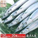 ご予約受付中 生さんま サンマの町女川より産地直送 たっぷり20尾 120g前後 約2.4kg 獲れたて三陸の秋味 生秋刀魚 さんま