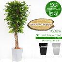 【送料無料】150cmフィカスツリー(S)(ナチュラルトランク)【観葉植物 造花 SC(CT)触媒・光触媒 フェイクグリーン】[G-L]