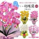 【母の日 花 胡蝶蘭 造花 お祝い】�