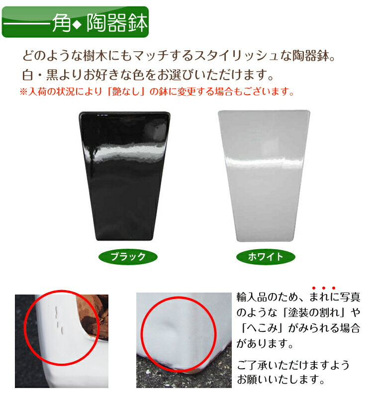 【送料無料】180cmクレストツリー(プラスチ...の紹介画像3
