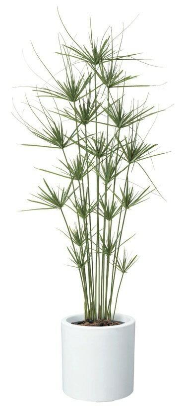 【送料無料】キプロスツリー【観葉植物 造花 SC(CT)触媒・光触媒 フェイクグリーン】[G-L]