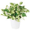 【人工観葉植物】 マーブルポトス 【観葉植物 造花 フェイクグリーン 光触媒 CT触媒 インテリア】