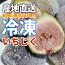 訳あり ご家庭用 フルーツ王国 和歌山県産 産地直送 冷凍いちじく 1.0kg クール便 送料無料