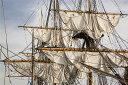 乗り物 のりもの 男の子 ボーイズの壁紙輸入 カスタム壁紙 PHOTOWALL / Sailing Ship (e19412)貼ってはがせるフリース壁紙(不織布)【海外取り寄せのため1カ月程度でお届け】【代引き不可】