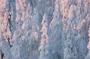 自然 森の壁紙 輸入 カスタム壁紙 PHOTOWALL / Lapland Winter Landscape (e23111) 貼ってはがせるフリース壁紙(不織布) 【海外取り寄せのため1カ月程度でお届け】 【代引き不可】