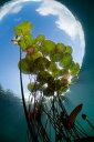 自然 花 フラワー フローラルの壁紙カスタム壁紙 輸入壁紙PHOTOWALL / Floating Water Lilies (e23521)貼ってはがせるフリース壁紙(不織布)【海外取り寄せのため1カ月程度でお届け】【今だけ送料無料】【代引き不可】