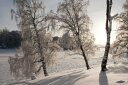 自然 季節 四季の壁紙 冬 雪山 輸入 カスタム壁紙 PHOTOWALL / Snow-Covered Silver Birches (e23612) 貼ってはがせるフリース壁紙(不織布) 【海外取り寄せのため1カ月程度でお届け】 【代引き不可】