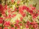 自然 花 フラワー フローラルの壁紙カスタム壁紙 輸入壁紙PHOTOWALL / Bougainvillea (e40179)貼ってはがせるフリース壁紙(不織布)【海外取り寄せのため1カ月程度でお届け】【今だけ送料無料】【代引き不可】