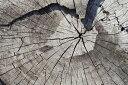 木目柄 ウッドの壁紙カスタム壁紙 輸入壁紙PHOTOWALL / Old Tree Trunk (e40419)貼ってはがせるフリース壁紙(不織布)【海外取り寄せのため1カ月程度でお届け】【今だけ送料無料】【代引き不可】