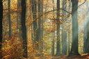 風景 景色 川 河の壁紙 輸入 カスタム壁紙 PHOTOWALL / Sunbeams in a Colorful Autumnal Forest (e40253) 貼ってはがせるフリース壁紙(不織布) 【海外取り寄せのため1カ月程度でお届け】 【代引き・後払い不可】