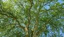 木 樹木 枝 モノクロ シルエットの壁紙輸入 カスタム壁紙 PHOTOWALL / Tree Crown (e310424)貼ってはがせるフリース壁紙(不織布)【海外取り寄せのため1カ月程度でお届け】【代引き不可】