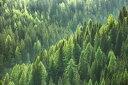 山 森 森林 木 自然 緑 グリーンの壁紙 輸入 カスタム壁紙 PHOTOWALL / Green Trees in Forest (e318278) 貼ってはがせるフリース壁紙(不織布) 【海外取り寄せのため1カ月程度でお届け】 【代引き不可】