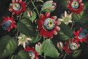 トケイソウ パッションフラワー 花 イラスト トロピカルの壁紙 輸入 カスタム壁紙 PHOTOWALL / Passiflora (e325263) 貼ってはがせるフリース壁紙(不織布) 【海外取り寄せのため1カ月程度でお届け】 【代引き・後払い不可】