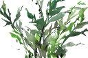 葉 植物 水彩画 緑 グリーンの壁紙 輸入 カスタム壁紙 PHOTOWALL / Just the Leaves II (e327398) 貼ってはがせるフリース壁紙(不織布) 【海外取り寄せのため1カ月程度でお届け】 【代引き・後払い不可】