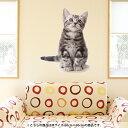 ウォールステッカー 飾り 60×60cm シール式 装飾 おしゃれ 壁紙 はがせる 剥がせる カッティングシート wall sticker 雑貨 DIY プチリフォーム パーティー イベント 賃貸 001070 アニマル 猫 アメリカンショートヘア