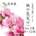 【2月1日ごろより発送開始】桃の花 ひな...