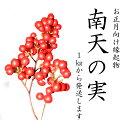 【12月1日より発送】南天の実 1kg 生花