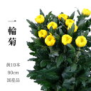 輪菊 黄色 菊 花 70〜80センチ 10本 切花 生花...