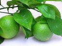 大分特産!爽やかな酸味と香りの健康果実かぼす青果【ハウス栽培】2kg