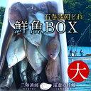 鮮魚BOX 大 宮城県石巻港産漁師の朝どれ新鮮魚ボックス 料理屋ご用達
